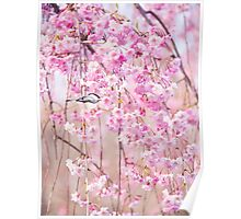 Black Cap Chickadee & Pink Weeping Willow Poster