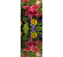 Fuchsia  flower in reflection Photographic Print