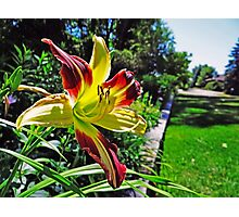 Beautiful Garden Lily Photographic Print