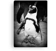 Happy Penguin Canvas Print