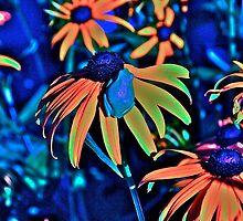 Blackeyed Susan Tree Frog (B2) by debara