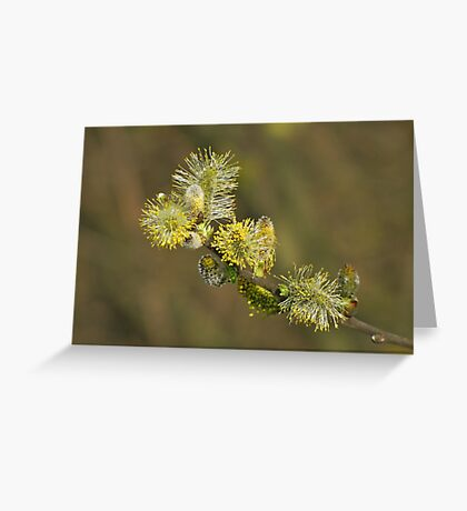 Willow Dream Greeting Card
