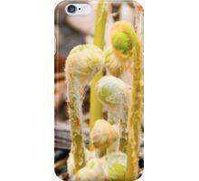 Fiddlehead Fronds iPhone Case/Skin