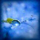 Blue drop dream by Christine Dyrnes
