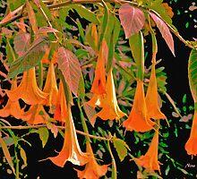 Trumpet's Flowers from the Studio's Garden by Nira Dabush