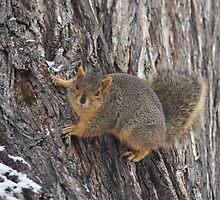 Squirrel by Christine  McClintock