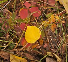 The Aspen Leaf by Christine  McClintock