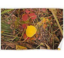 The Aspen Leaf Poster