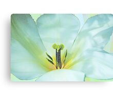 On pastel wings Canvas Print