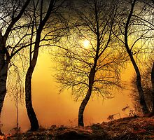 Sun behind the trees by Roberto Pagani