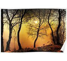 Sun behind the trees Poster
