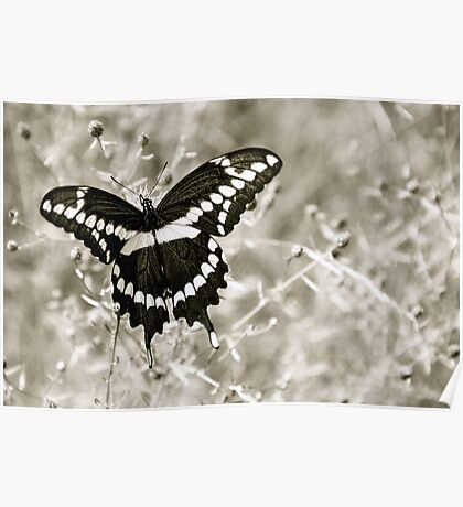 Large Butterfly Poster