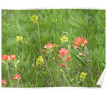 Wild Mustard and Indian Paintbrush Poster