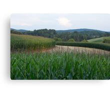 Virginia Corn Fields Canvas Print