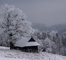Winter by AJM Photography