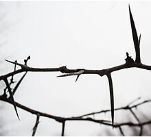 A Crown of Thorns Photographic Print