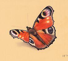Butterfly by LFurtwaengler