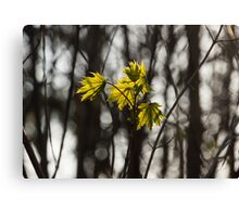 Green Spring - First Leaves in the Forest Canvas Print