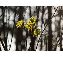 Green Spring - First Leaves in the Forest Photographic Print