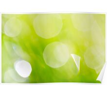 Green Abstract - Dewdrops in the Sunlit Grass - Natalie Kinnear  Poster