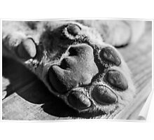 Cubs Paw in B&W Poster