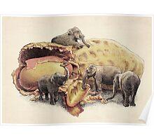 Elephant's Paradise  Poster