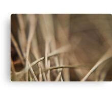 Casuarina Needles Abstract Canvas Print