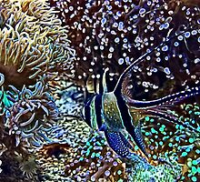 Reef and Fish by umeimages