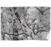 White Branches  Poster