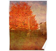 The Orange Tree Poster