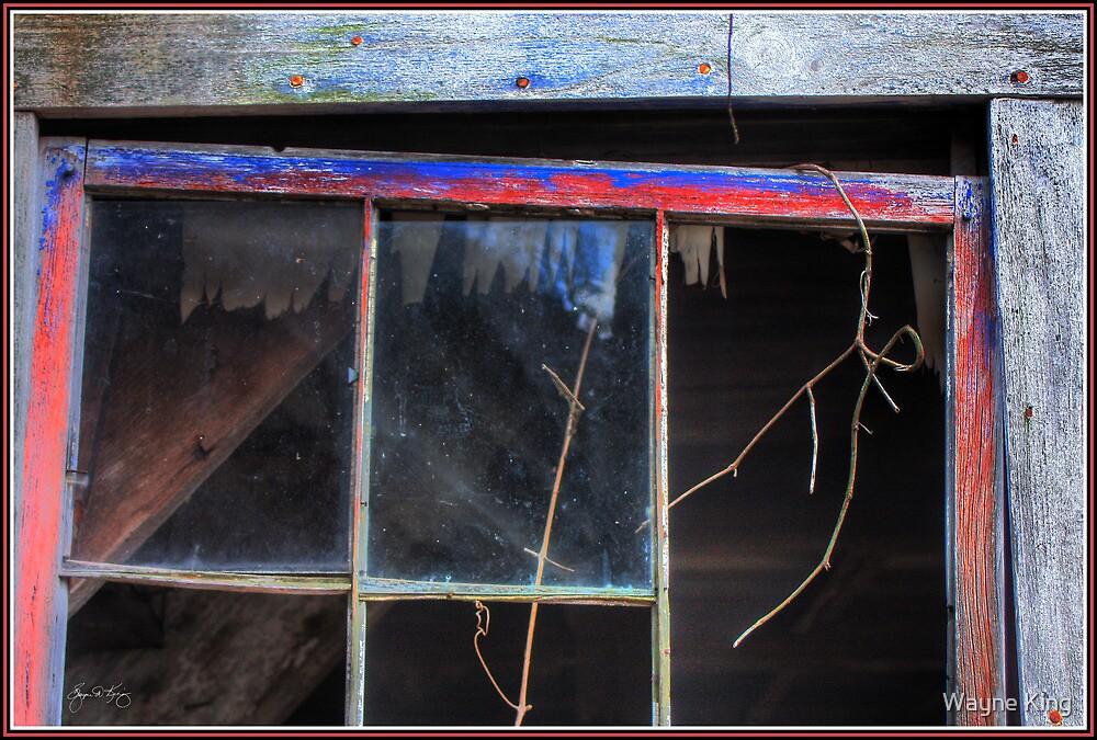 Window Vine by Wayne King
