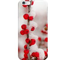 Red Berries in Winter iPhone Case/Skin