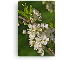 Cherry Blossoms on a Stick II Canvas Print