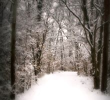 winter path by Susan Kaufman