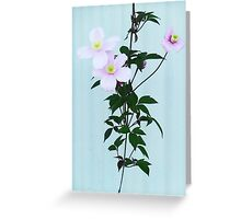 The Pink Clematis  Greeting Card