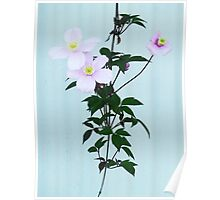 The Pink Clematis  Poster