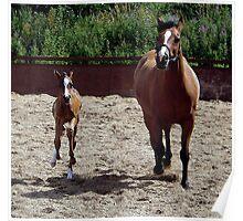 Arabian Mare & Foal Portrait Poster