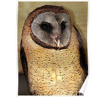Ashyfaced Owl Portrait Poster