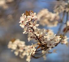 A White Spring Evening by Michael Gray