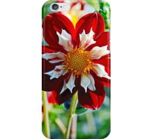 Dahlia Flower iPhone Case/Skin