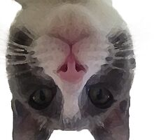 Crazy Gracie Upside Down Kitty by mlswig