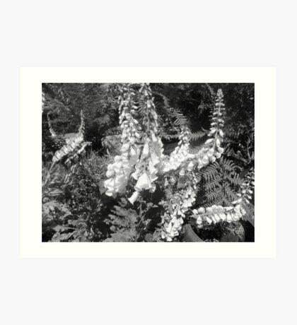 Black &  White Delphiniums Art Print