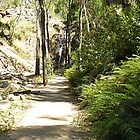 Path to Waterfalls at the end -Grampians, Vic. Australia by EdsMum