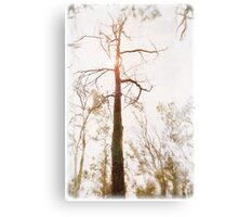 Winter in the Woodlands Canvas Print