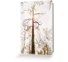 Winter in the Woodlands Greeting Card