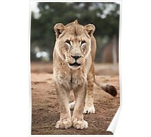 Lioness - Looking at You Poster