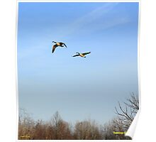 Treetop Geese Poster