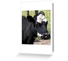 Cow Selfie Greeting Card