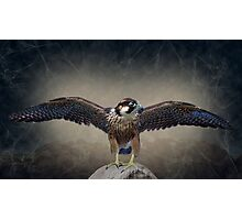 King of the World Photographic Print