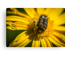 HAIRY INSECTS 2  Canvas Print